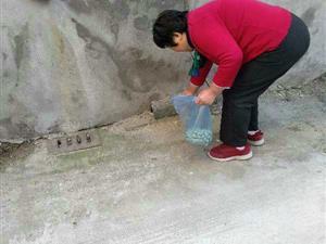 桥北社区开展春季灭鼠工作
